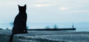 財産を運んでくれる黒猫 クロネコ