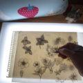 ライトボックスを使って青書している写真